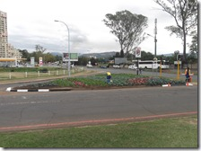 Cnr Leinster Road and Alan Paton Avenue - planting vegetables on the traffic island