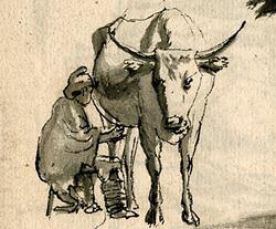 Sketch of Khoikhoi milking
